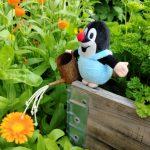 Minä ja puutarha – kymmenen faktaa