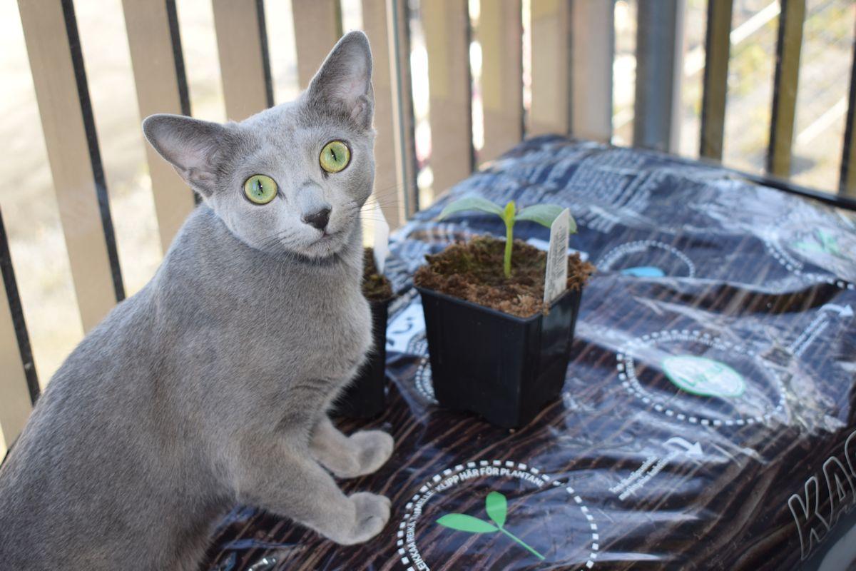 kissa kasvusäkin päällä