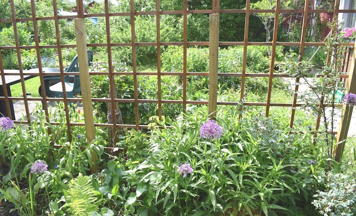 rikkaruohojen kitkeminen kukkapenkistä