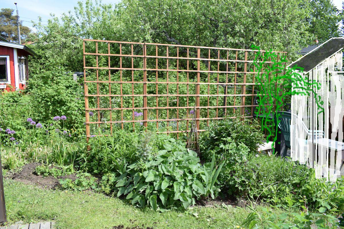 köynnösritilä, puutarhavaja ja köynnöskuusama