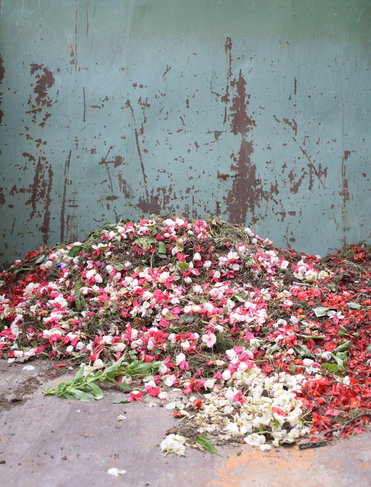 Kukan terälehtiä roskiksessa.