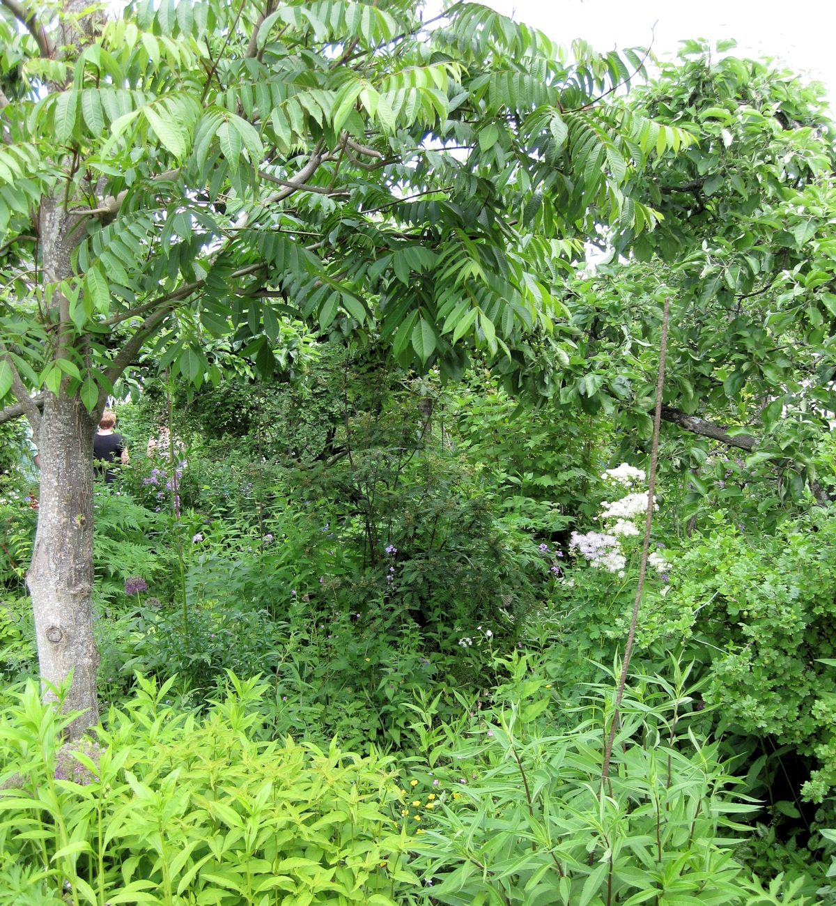 Vihreä ja rehevä puutarha.