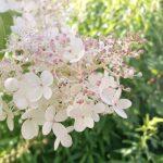 Kolme kuukautta puutarhablogin kirjoitusta takana – Kirja arvonta! (Arvonta on päättynyt)