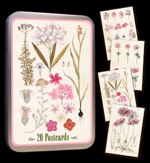 Opetustaulu postikortit