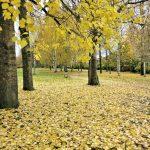 Keltainen matto ja värikäs sipulimatto kevääksi