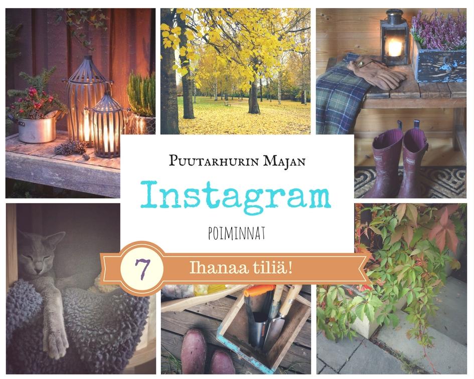 Parhaat puutarha instagram-tilit.