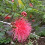 Kasvitieteellinen puutarha – Jardín Botánico
