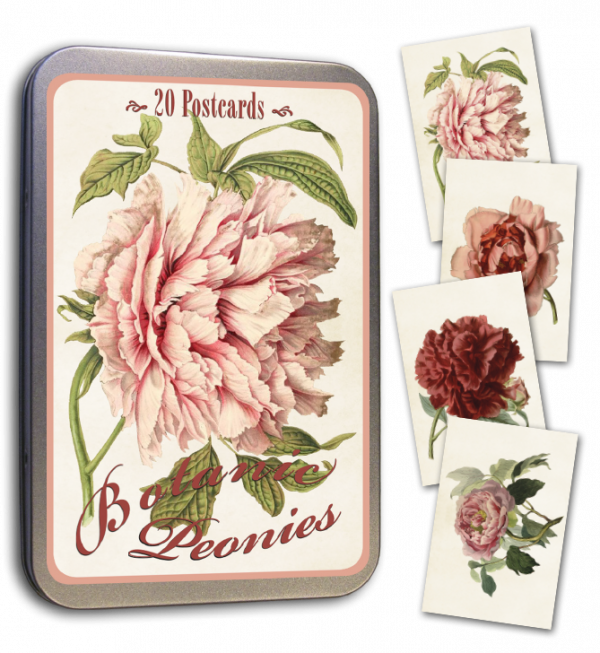 Peltirasia postikortit pionit