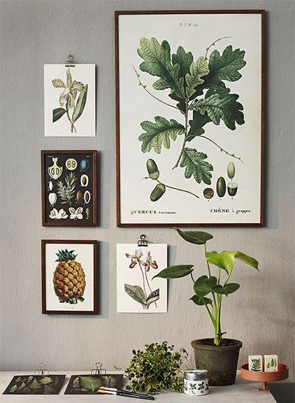 Tammi juliste ja muita pieniä kasvijulisteita seinällä
