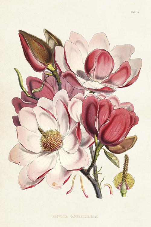 Sköna Ting postikortti magnolia vaaleanpunainen