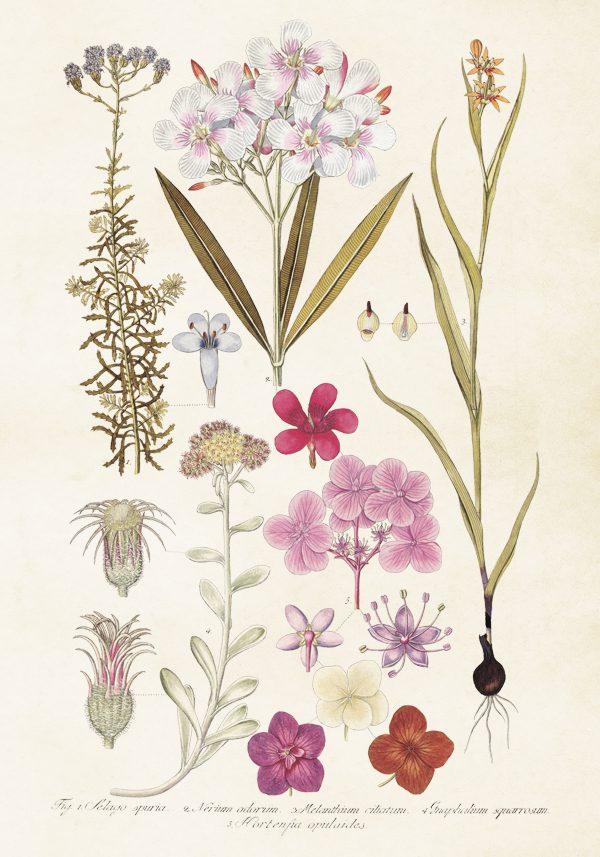 Sköna Ting vintage juliste hortensian kukat