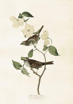Sköna Ting vintage juliste linnut