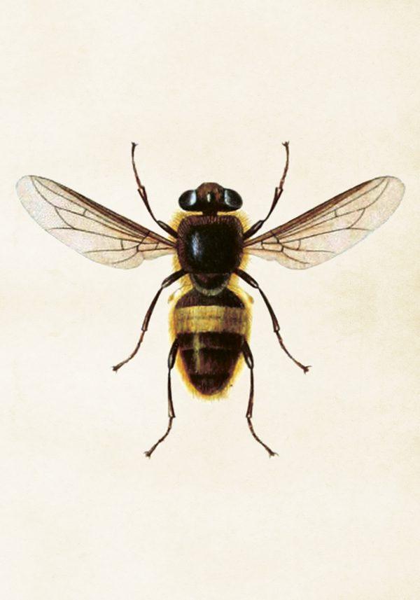 Sköna Ting vintage juliste mehiläinen