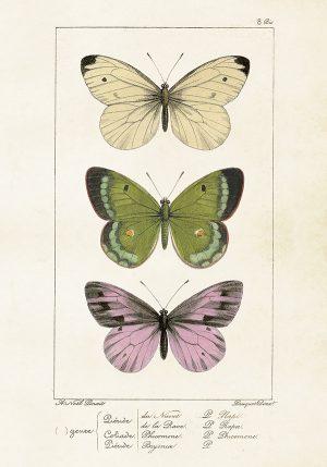 Sköna Ting vintage juliste perhoset