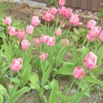 Syksyn kukkasipulit