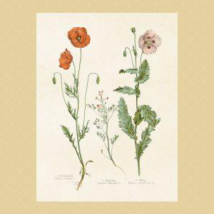 Kasvitaulut ja julisteet