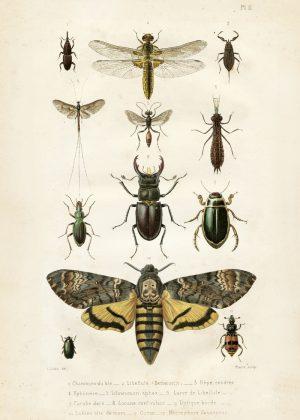 Opetustaulu juliste hyönteiset