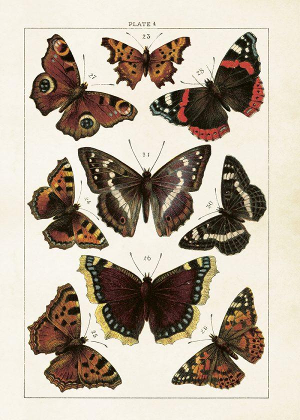 Opetustaulu juliste perhoset Sköna Ting