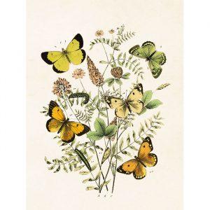Perhosaiheinen juliste keltaisia ja vihreitä perhosia