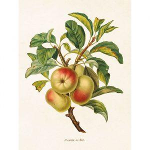 opetustaulu omenanoksa