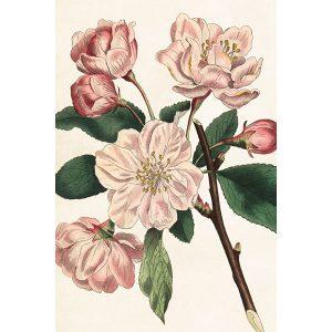 omenanoksa postikortti