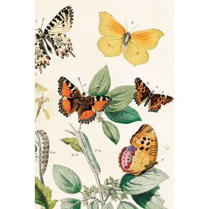 värikkäitä piirrettyjä perhosia