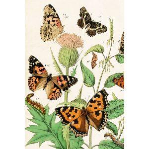 nokkosperhosia piirrettynä postikortissa