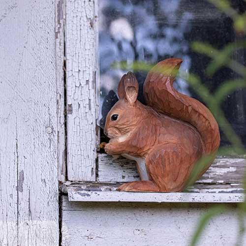 Pieni orava koriste ikkunalaudalla