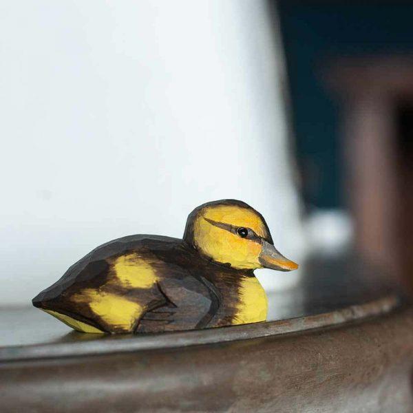 puinen keltaruskea sinisorsan poikanen, wildlife garden
