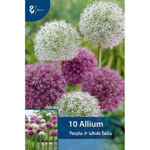 pallomaisia violetteja ja valkoisia laukan kukkia