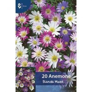 sekoitus pinkkejä, violetteja ja valkoisia balkaninvuokkoja