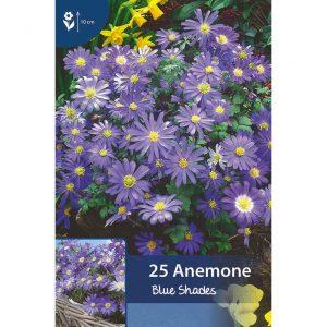 balkaninvuokon kukkia, joissa kapeita suippoja violetinsinisiä terälehtiä ja keltainen keskus