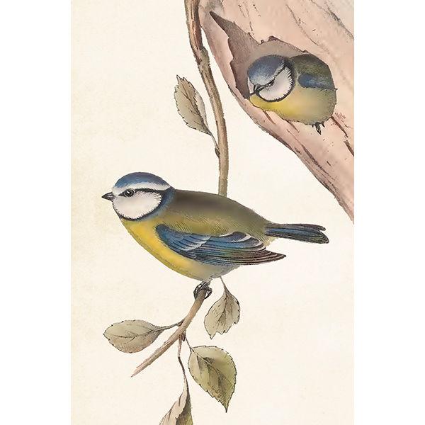 juliste linnut