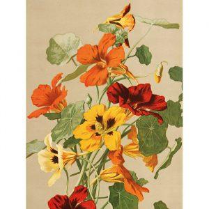 punaisen keltaisen ja oranssin sävyiset kukat juliste