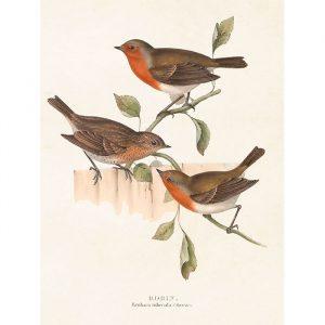 juliste kolme lintua
