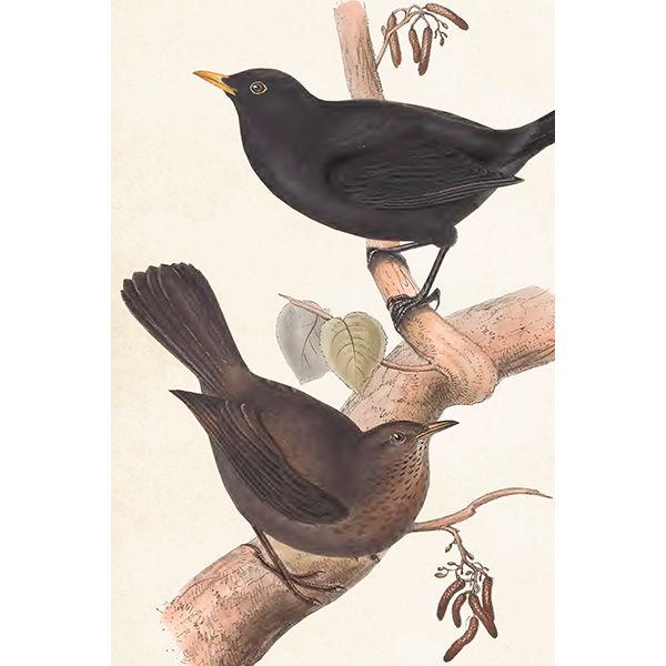 linnut postikortti