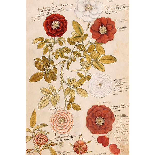 punasävyiset kukat postikortti