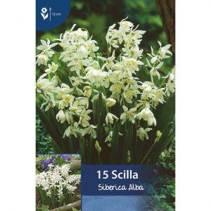 useita pieniä valkoisia kukkia kukkasipulien varsissa
